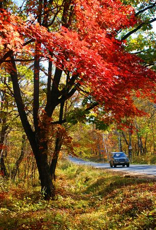 road autumnal: Autumnal scene, park and car on road
