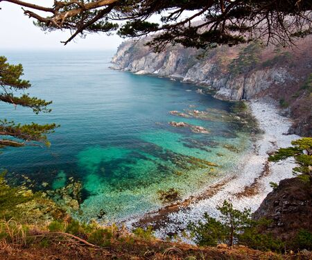 cedars: Seascape, green water bay in Sea of Japan, Primorye, Russia, Far Eastern Maritime preserve