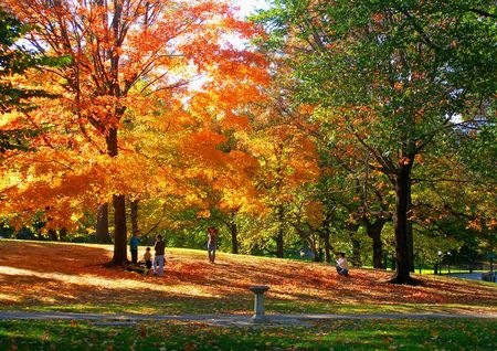 Golden autumn in central park, New York         photo
