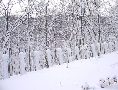 Snowy road, winter forest, deep snow Stock Photo - 7818394