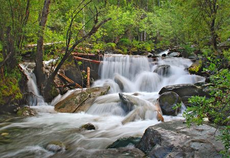 trickles: Forest waterfall