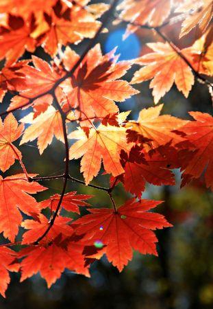 Autumnal ornament Stock Photo - 7818447