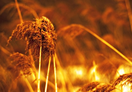 Autumnal field photo