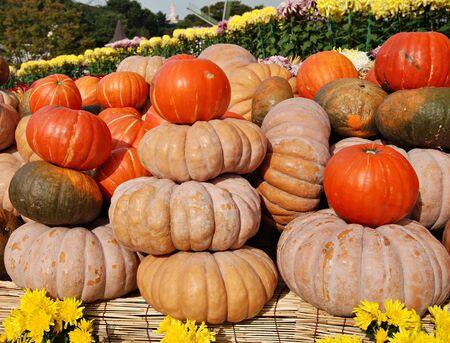 gourds: Heap of ripe pumpkins