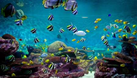 Fishes and coral, underwater life photo