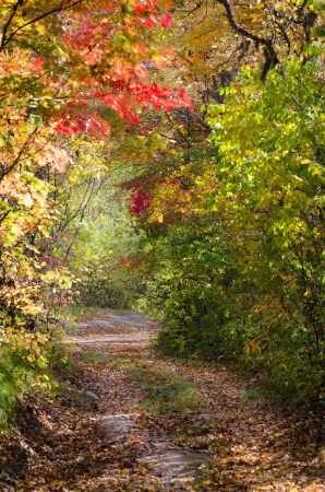 Autumnal alley, colorful autumn, park path through red maples Stock Photo
