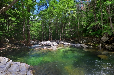 the far east: Panorama of forest river, green water, beautiful landscape, Primorye, Far East, Russia