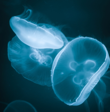 Jellyfish in deep sea, underwater life photo
