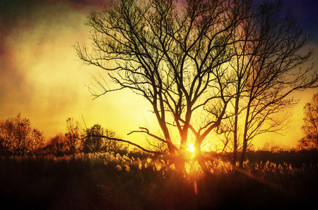 Beautiful sunset, trees in meadow, landscape against sun, evening sunbeams through branches of tree, golden sky photo