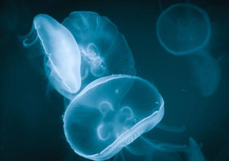 deepsea: Jellyfish in deep sea, underwater life