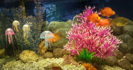Underwater scene, coral reef, colorful fish and jelly in ocean water