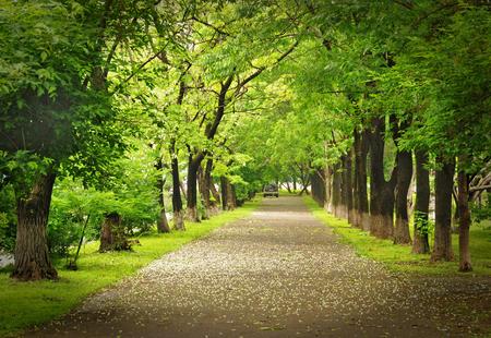 Green park, parkway Standard-Bild