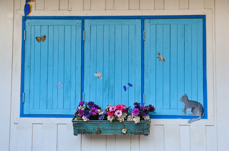 herbera: Old window with blue wooden shutters and flower pot with flowers gerbera, design element or background