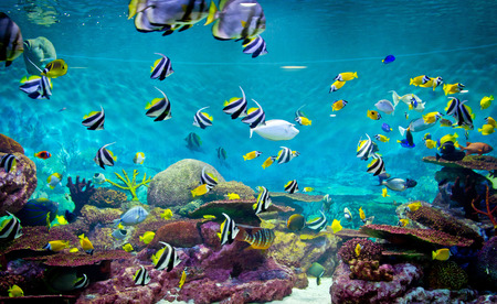 reefscape: Fishes and coral, underwater life