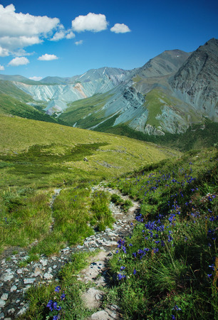 river view: Altai, Russia, mountains and river, panorama, wild landscape, Belukha view, green valley, beautiful nature