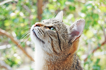 light brown cat on the nature looks to the top Stock Photo