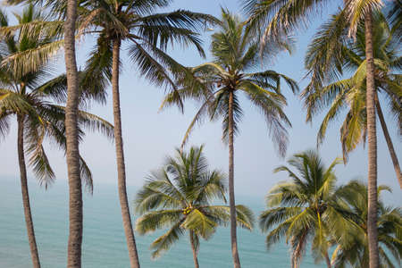 Photo of Palm trees juicy greenery against the blue sky, beautiful summer background. Travel concept Foto de archivo