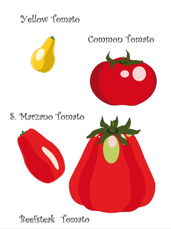 in common: four qualities of tomatoes, San Marzano, beef heart, yellow and common tomato isolated on white background