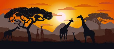 Silhouette of giraffes of the African savannah. Scenery. Africa. Bright vector illustration. Wildlife