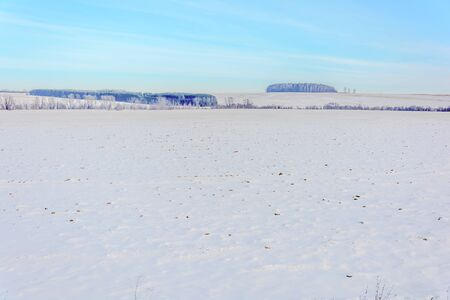 Snow-covered field near the forest in winter Stockfoto