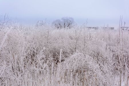 Thick fog over the meadow cold in winter