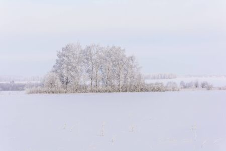 Snow field with rarely standing trees in cold winter
