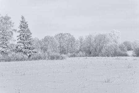 Snow field with rarely standing trees in cold winter Imagens