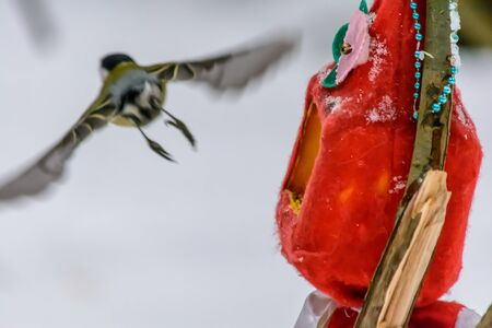 The bird flies away from the feeder in the cold winter