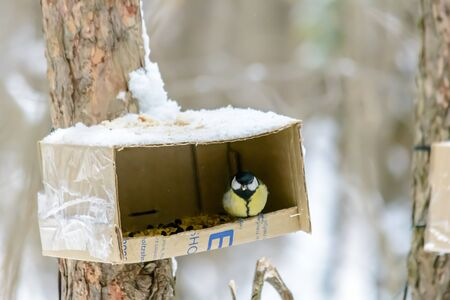 A titmouse sits on a feeder in cold winter