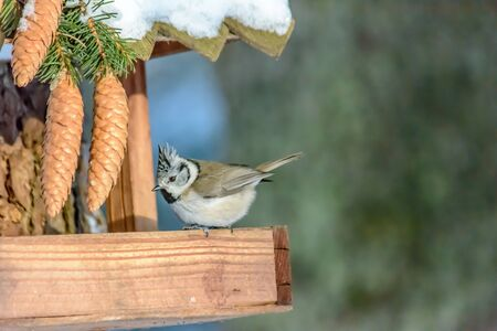 A bird Grenadier sits on a feeder in cold winter Archivio Fotografico