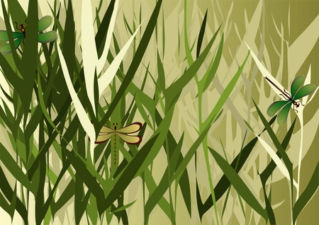 reed: reed grass with dragonfly on a beige background