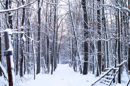 Hardwood forest in Wisconsin after a snowstorm in December