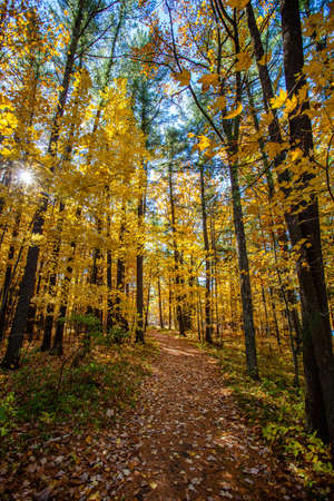 Colorful, Wisconsin, autumn trees in October during the morning, vertical