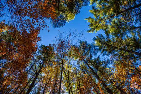 Colorful, Wisconsin, autumn trees in October during the morning, horizontal Stock fotó