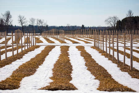 Ginseng field in central Wisconsin in February, horizontal