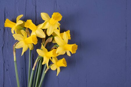 a bouquet of blooming spring daffodils lies on a background on a blue background