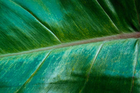 beautiful palm leaf close up