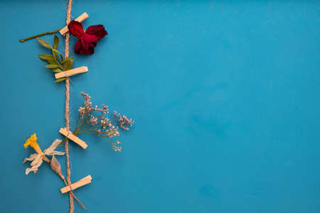 dry herbs and flowers on clothespins on a rope on a blue background Standard-Bild - 161786885