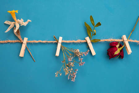 different herbs and flowers on clothespins on a rope on a blue background