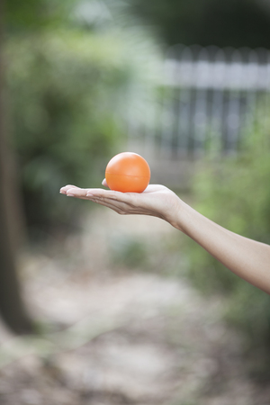 woman s hand holding a stress ball  photo