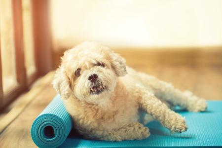 yoga mat: Dog on yoga mat