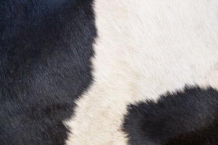 vaca: textura de piel de vaca