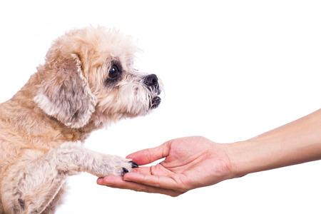 Human hand holding dog paw. isolated on white background Stock Photo