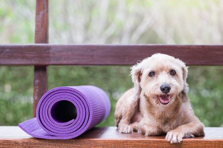 lies down: Dog lies down beside yoga mat
