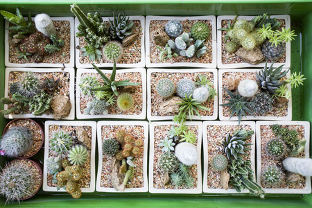 flowerpots: Cactus collection in small flowerpots