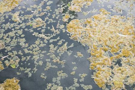 excremental: Wastewater, Pollution