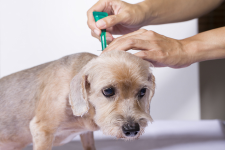 tick: tick and flea prevention for a dog