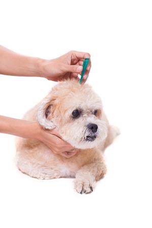 garrapatas y prevención de la pulga para un perro
