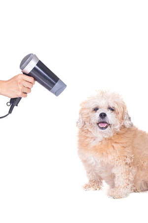 blow dryer: Groomer using blow dryer on a dog