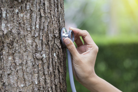 woman hand listens to a tree with a stethoscope, concept love the environment